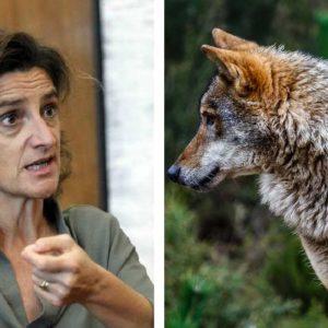 El Consejo de Estado frena el blindaje del lobo, pero el MITECO se inventa una nueva treta