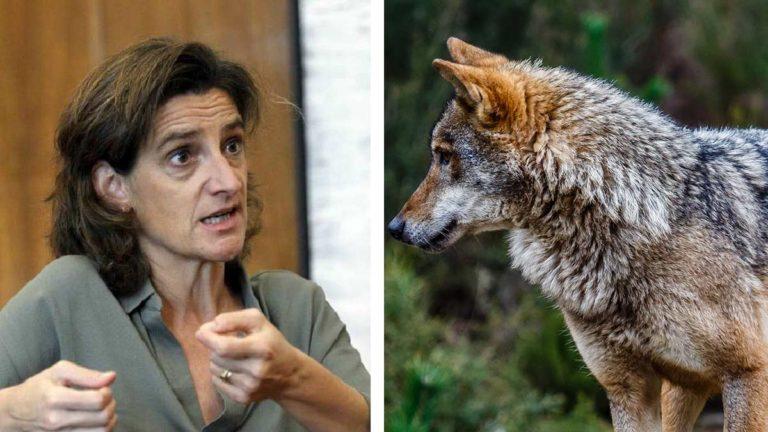 Teresa Ribera y lobo. © Shutterstock