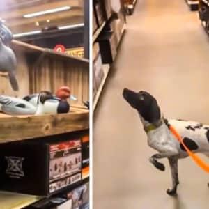 Esto es lo que pasa cuando llevas a un perro de caza a una armería