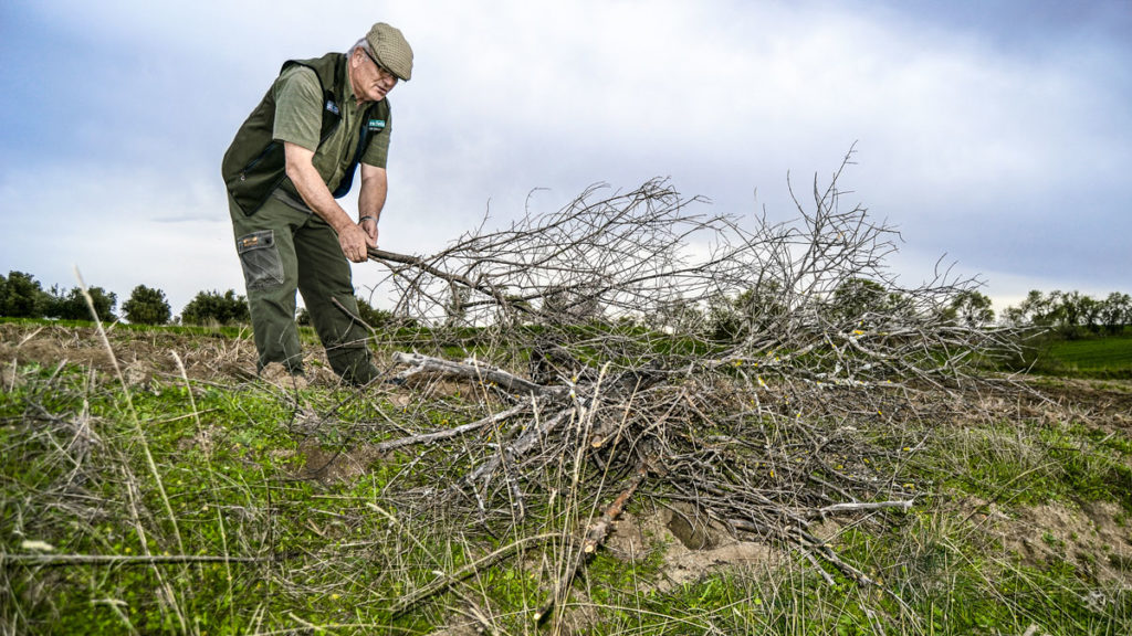 Un cazador protege un vivar de conejos con ramas.