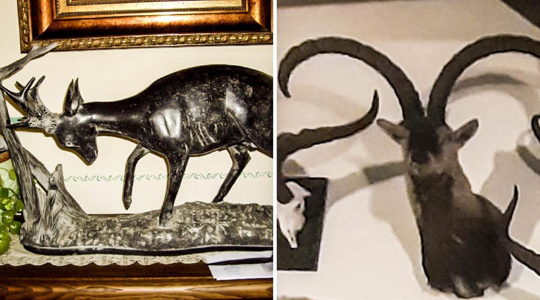 Roban a un cazador de Salamanca 24 trofeos, esculturas y su 4×4: «Me han destrozado»