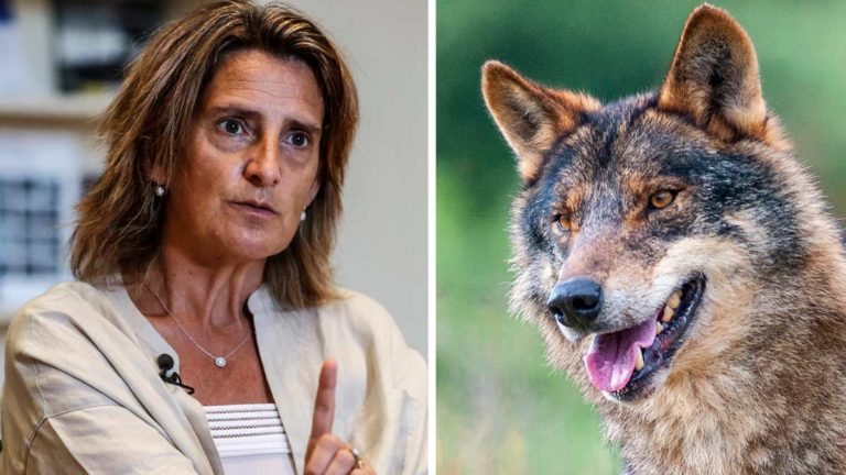 Teresa-ribera-lobo