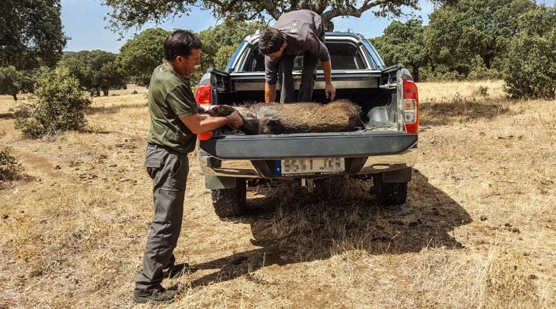 Los cazadores, obligados a rellenar un impreso para transportar los jabalíes abatidos en espera en Madrid
