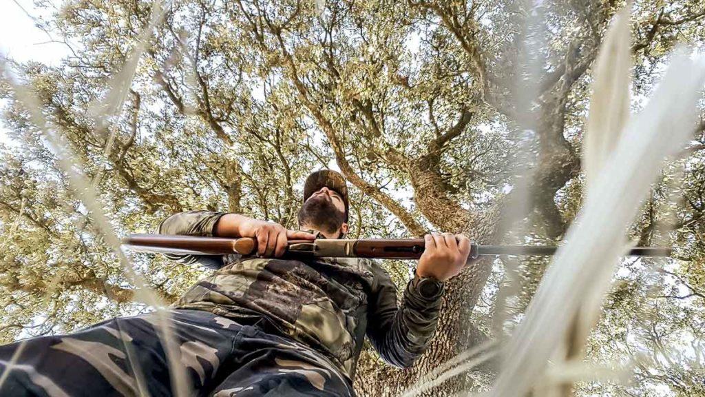 Cazando paloma torcaz en media veda bajo una encina. © Israel Hernández