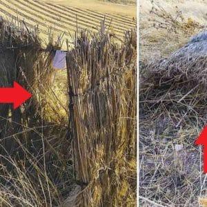 Un animalista destroza un puesto de caza de paloma y anima a otros a hacer lo mismo esta media veda