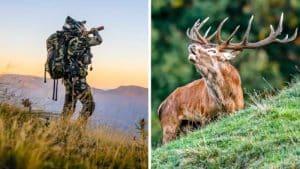 La caza del ciervo en berrea en los Pirineos, una aventura cinegética auténtica