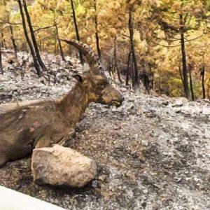 Los cazadores se vuelcan en la extinción del incendio de Sierra Bermeja, en Málaga