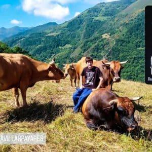 La triste carta de un joven ganadero a Teresa Ribera tras la prohibición de la caza del lobo