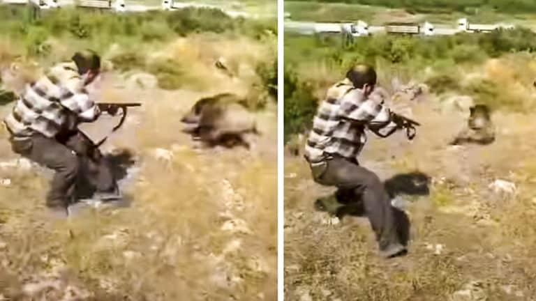 El cazador dispara al jabalí.