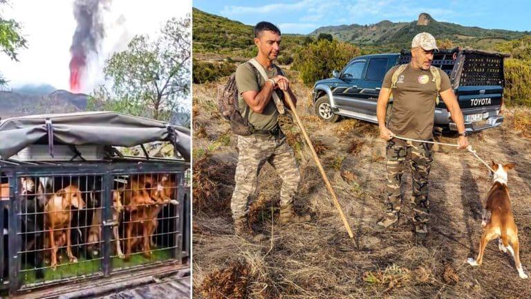 Los cazadores han rescatado a los perros para salvarlos de la lava. © Jara y Sedal