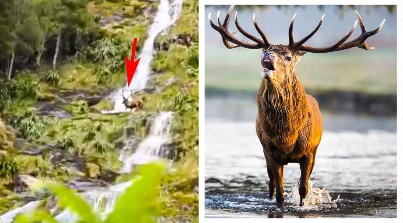 Graba cómo un ciervo se despeña por una cascada de agua mientras presenciaba la berrea
