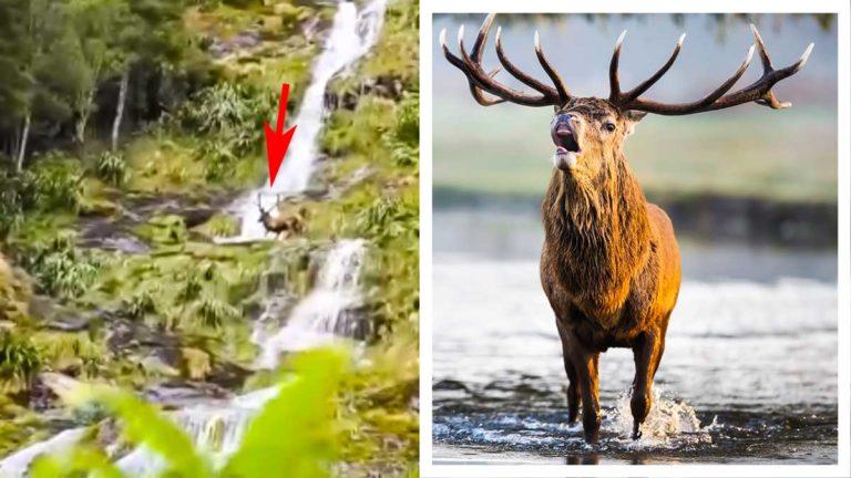 Imagen del vídeo y ciervo en agua. © Shutterstock