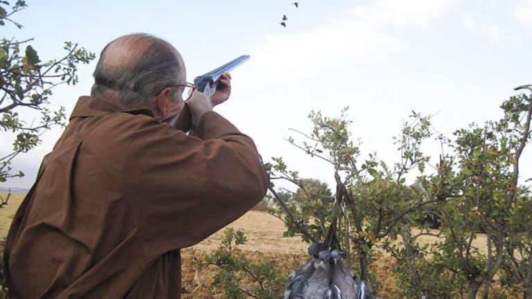 Claves para cazar palomas torcaces.