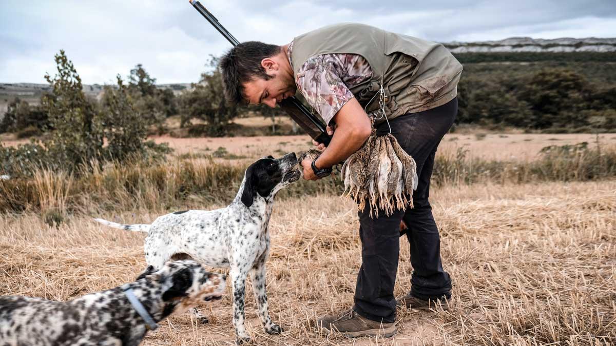 6 consejos de un campeón de España para cazar codornices en septiembre