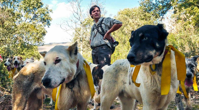 8 consejos para evitar que te roben tus perros de caza