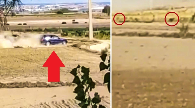 Así actúan impunemente los furtivos de liebres: persiguiéndolas en época de veda y desde el coche