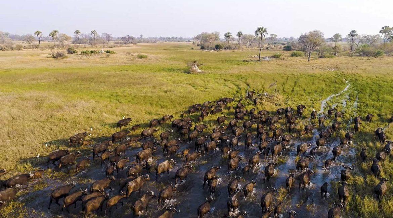 Así se ve la grandiosidad de la naturaleza grabada con un dron en 4K