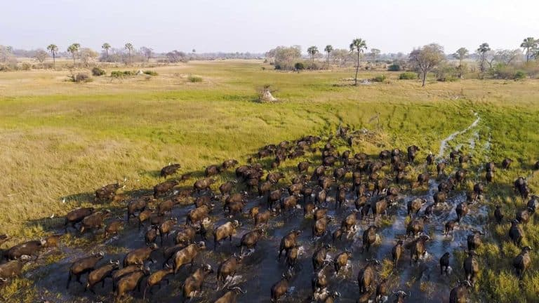 dron África