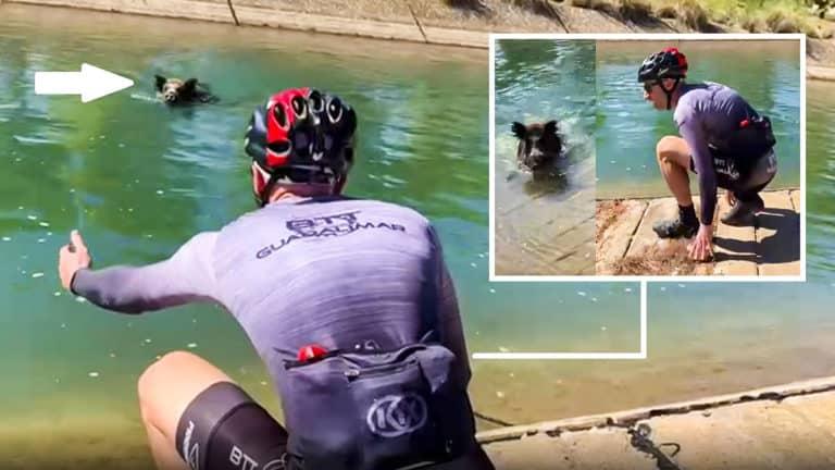 jabalí ataca ciclista