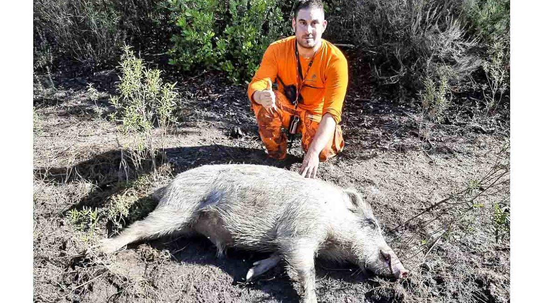 Cazado un gran jabalí blanco de 100 kilos en Cataluña