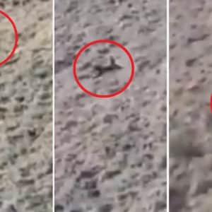 Un jabalí cae desde decenas de metros por una ladera en este increíble lance de caza