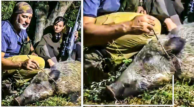 Un cazador abate un jabalí con el lazo de un furtivo al cuello