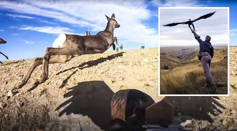 Este increíble vídeo muestra 50 lances de águila real a corzos y zorros en España