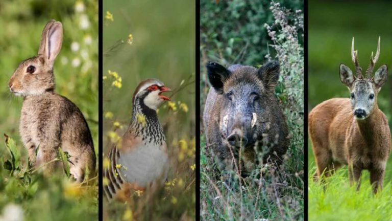 mitos caza