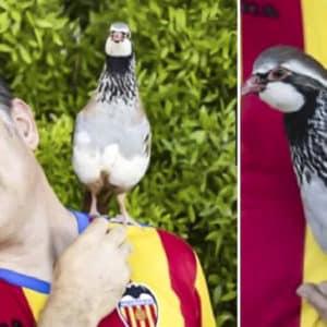 La perdiz Tako y su dueño empiezan una nueva andadura para promocionar la marca España