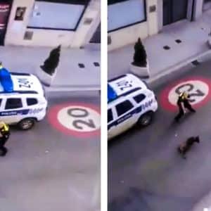 La Policía dispara contra un perro peligroso que intentó morder a dos niños en Vizcaya