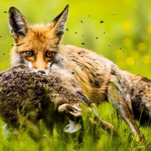 La FAC pide a la Junta de Andalucía mejorar las prácticas agrícolas y controlar predadores