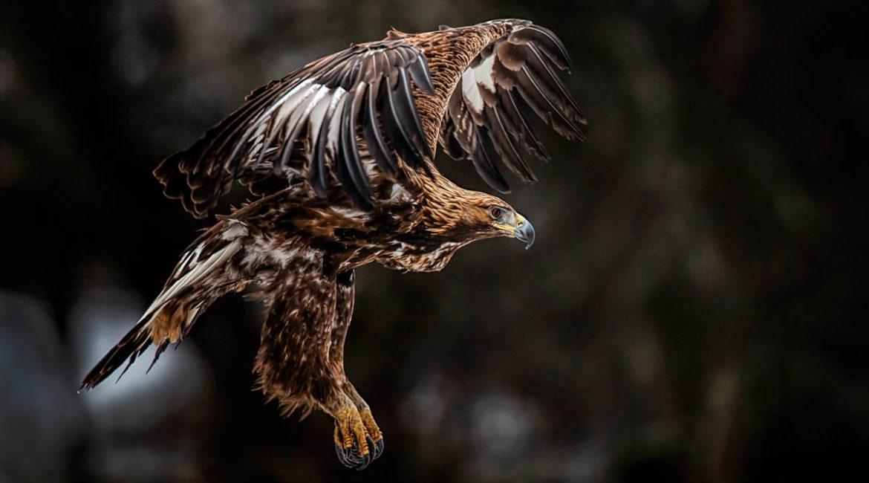 LA RFEC firma un convenio de colaboración con seis ONGs ecologistas que respetan la caza