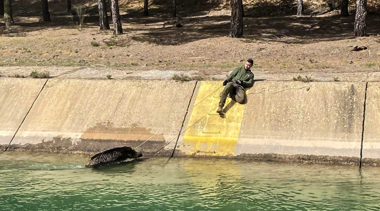 Los cazadores llevan a la fiscalía la muerte de animales en el trasvase Tajo-Segura
