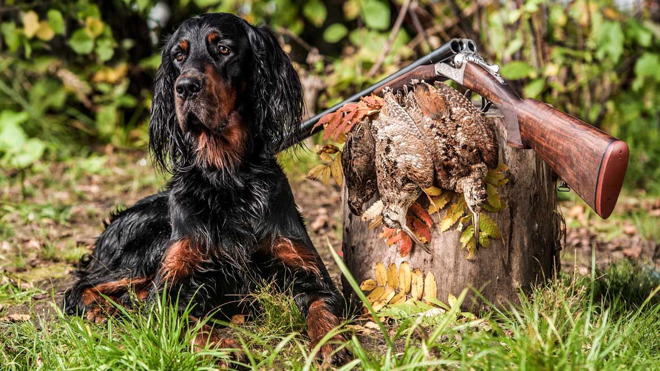Así se vive una jornada de caza de becada con perros de muestra
