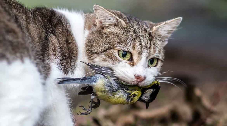 Casi 900 científicos se oponen a la Ley de Derechos de los Animales que prepara el Gobierno
