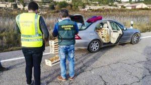 Furtivos de setas: decomisan 25 kilos de boletus y 50 de níscalos en Soria