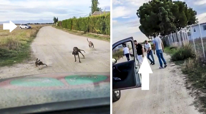 Un guarda de caza persigue y graba a varios furtivos que corrían liebres con su coche
