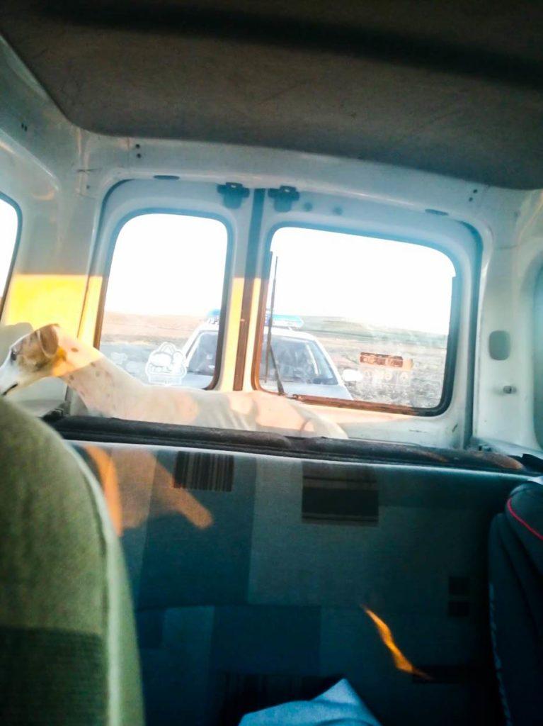 La galga robada que se encontraba en las instalaciones de Galgos del Sur, tras ser rescatada por la Guardia Civil y su dueña el 6 de octubre.