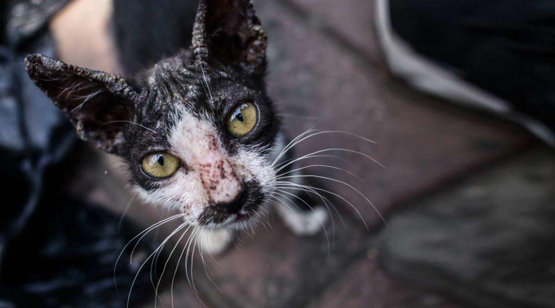 Las colonias de gatos son una amenaza para la salud pública, pero el Gobierno quiere blindarlas