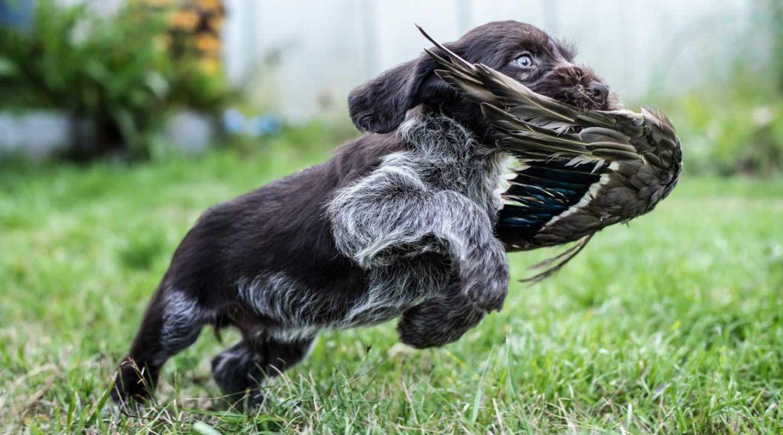 Los veterinarios también se oponen a la Ley de Derechos de los Animales: «Carece de rigor científico»