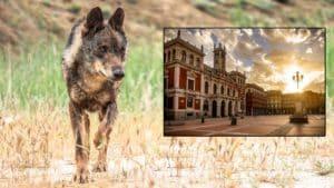 Los lobos merodean a las puertas de Valladolid