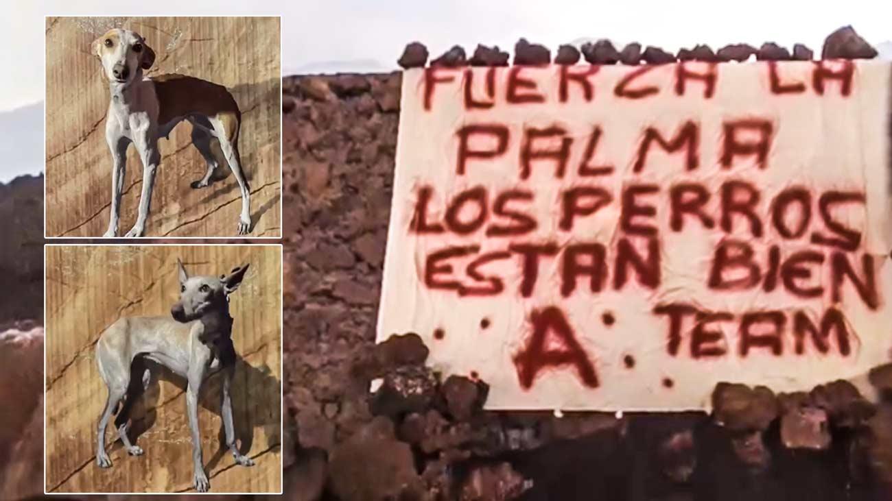 Fin del enigma: Así rescataron a los perros de La Palma atrapados por la lava del volcán