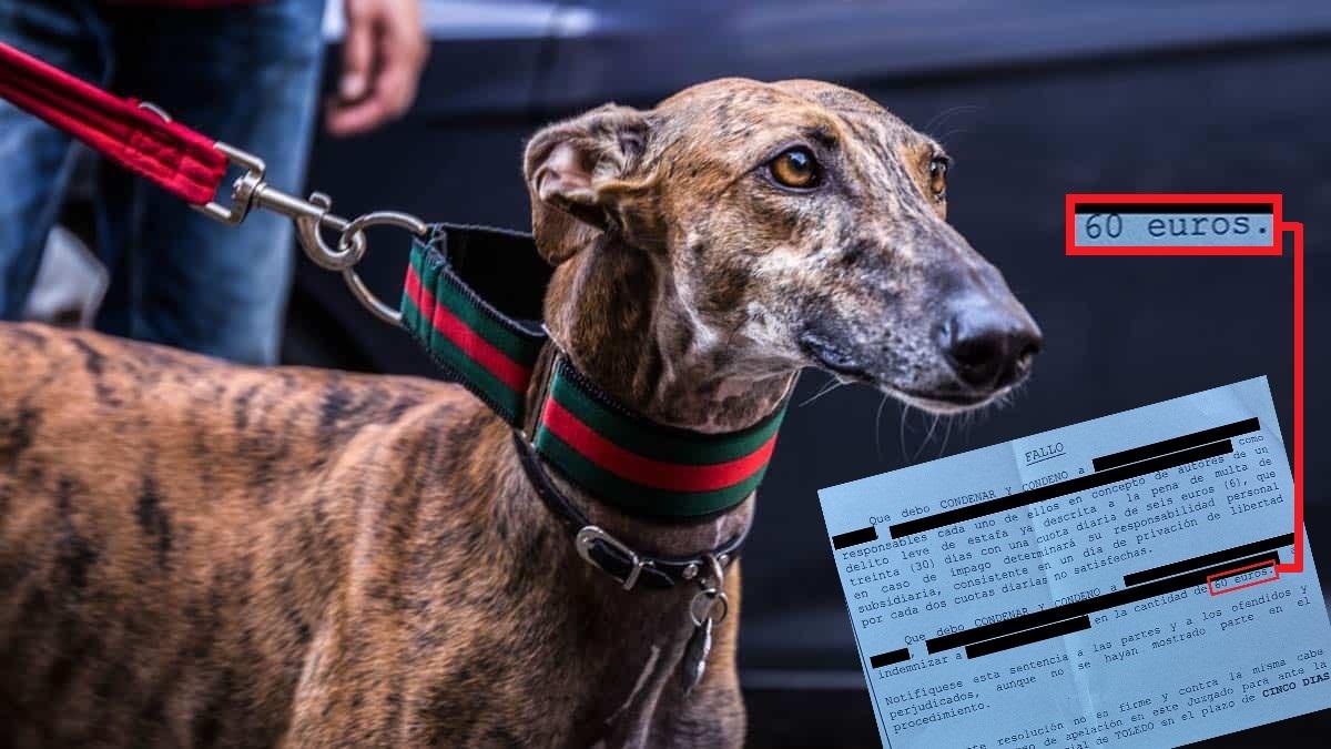 La estafa de perros perdidos sale gratis: esta es la vergonzosa sentencia de una cazadora estafada