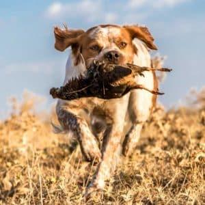 Temporada de caza 2021/2022: Todas las fechas y especies, comunidad por comunidad
