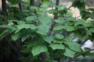 Plantas que ahuyentan insectos