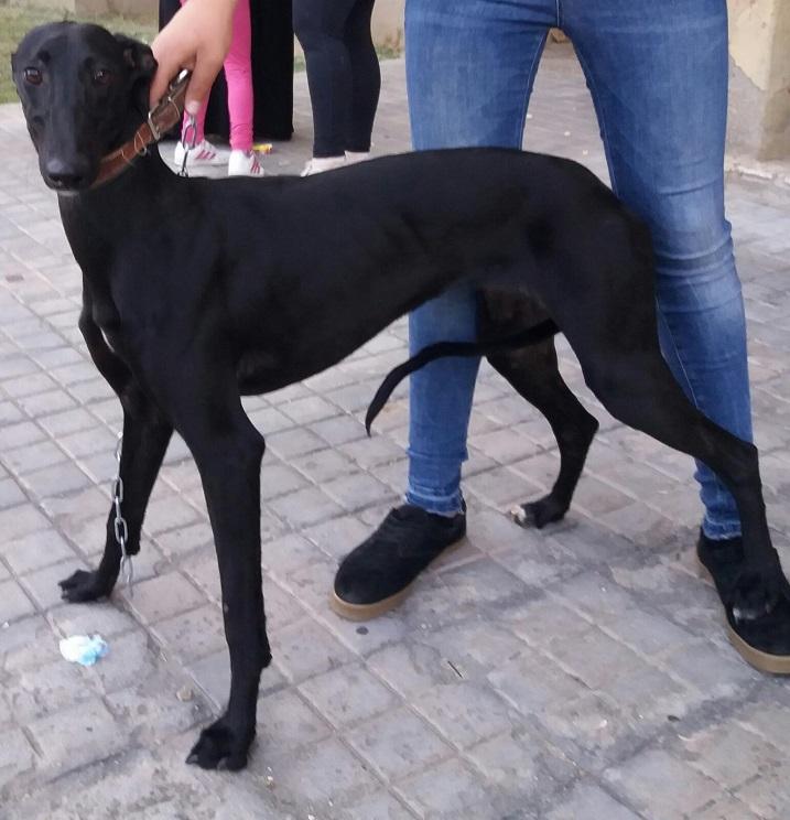 Cachorra desaparecida / Fotografía: Jara y Sedal