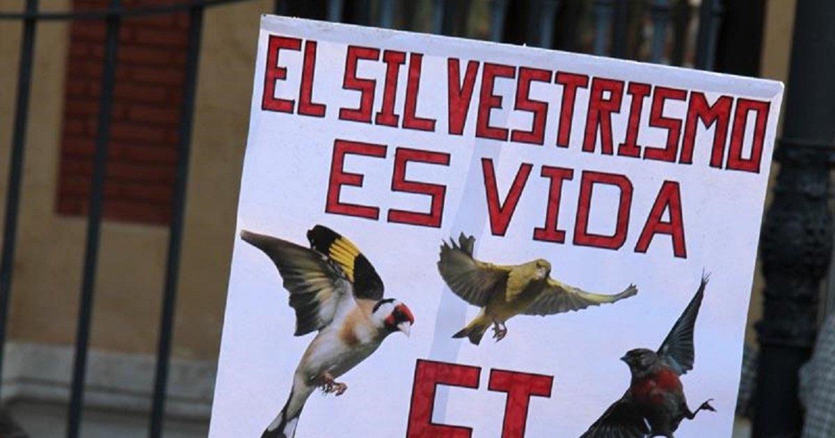 La Plataforma en Defensa del Silvestrismo emprende acciones judiciales en Guipúzkoa para defender la modalidad