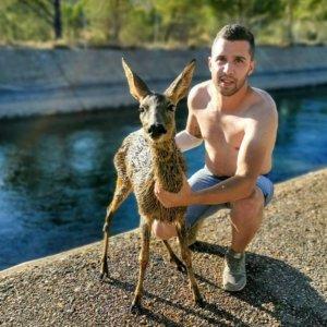 Un cazador salva una corza que había caído a un canal y la cura en su casa
