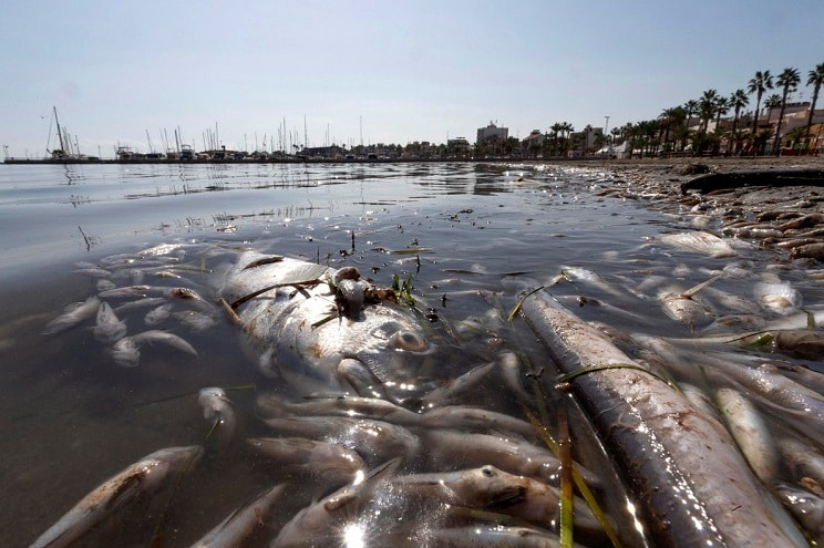 peces mar menor