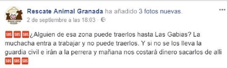 Captura de pantalla de una publicación en Facebook de Rescate Animal Granada / Fotografía: Facebook